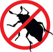 Professional Pest Control BC | Licensed, Certified & Insured Pest Control